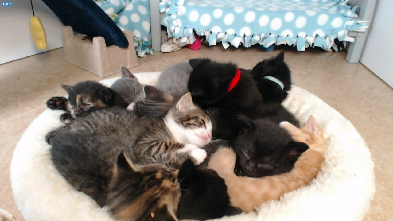 10 kittens in a pile 2015-08-30