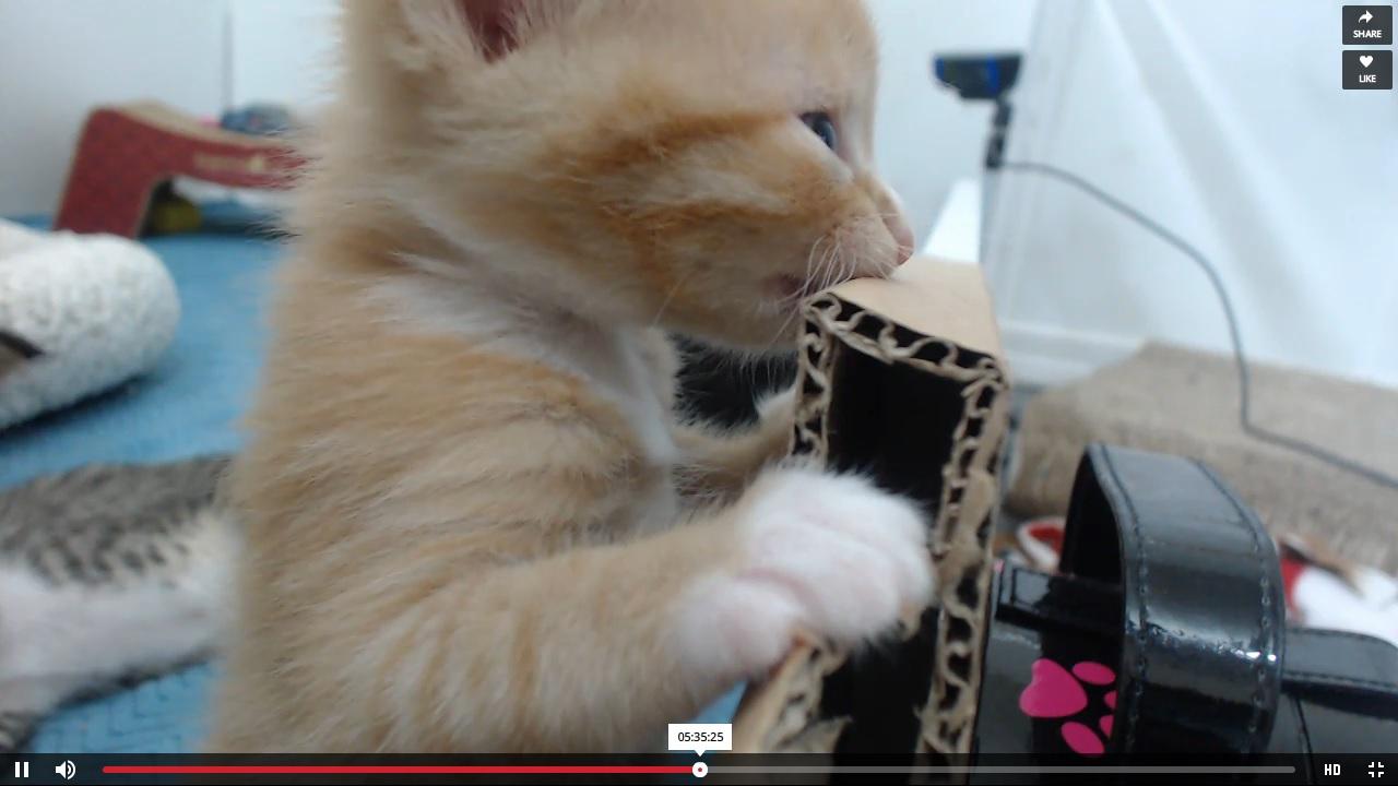 Bootsie cuteness, pre-move, 2015-08-28