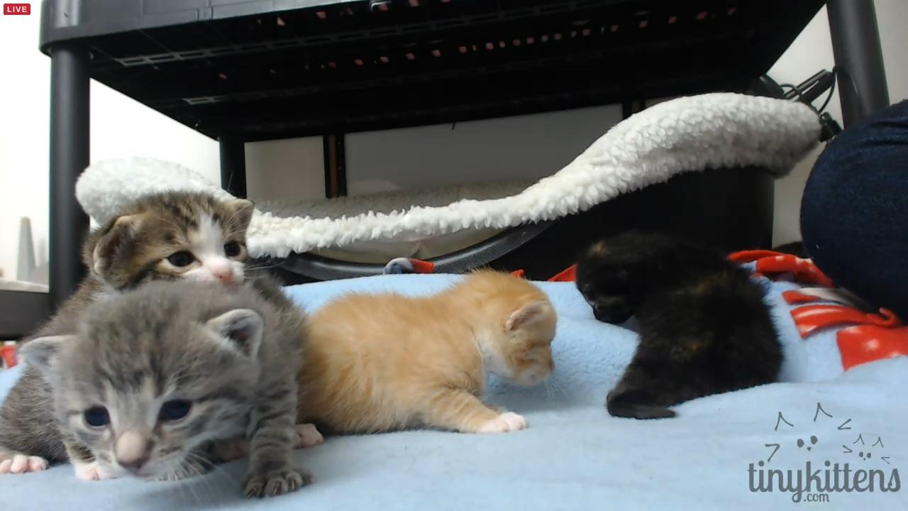 floor time for kittens