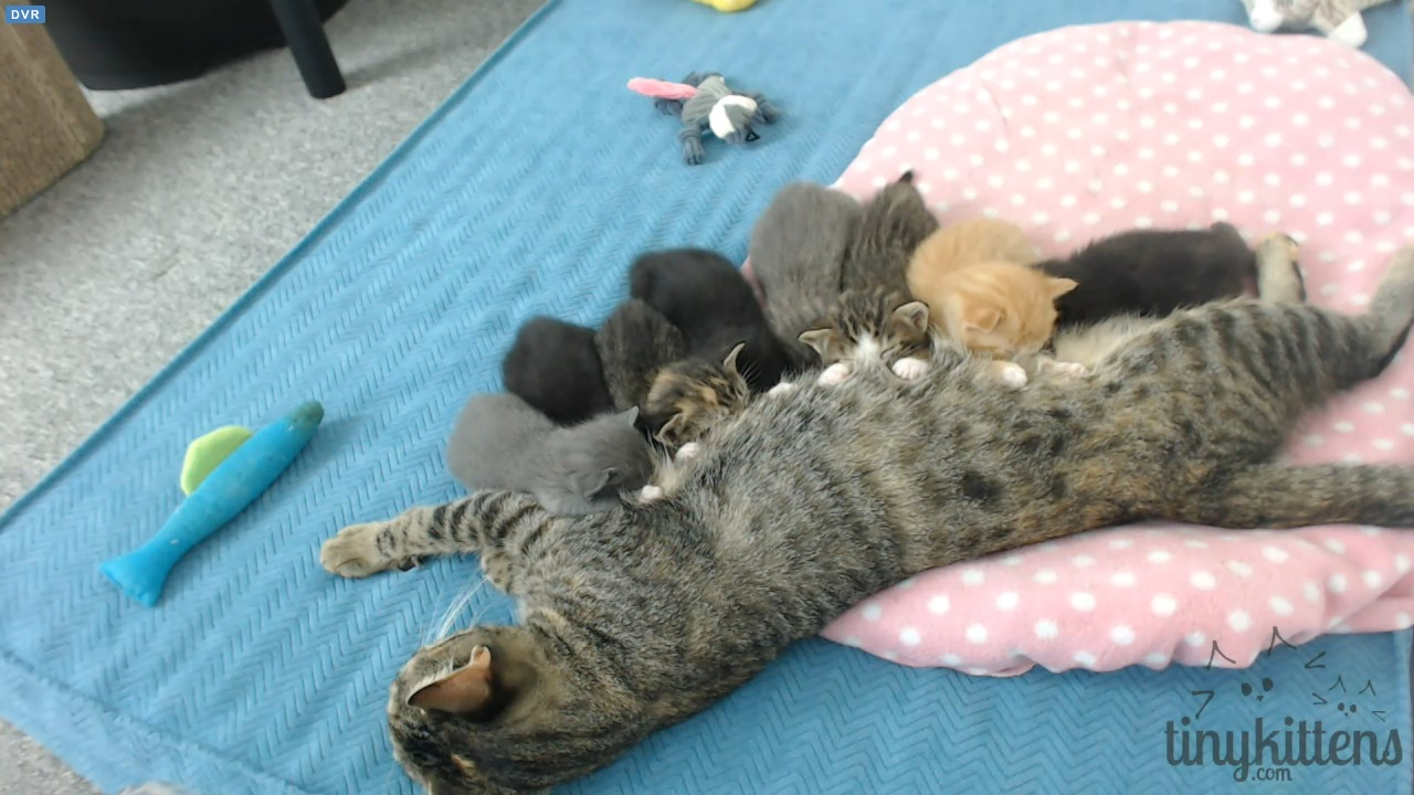 kittens all lined up 2015-08-24