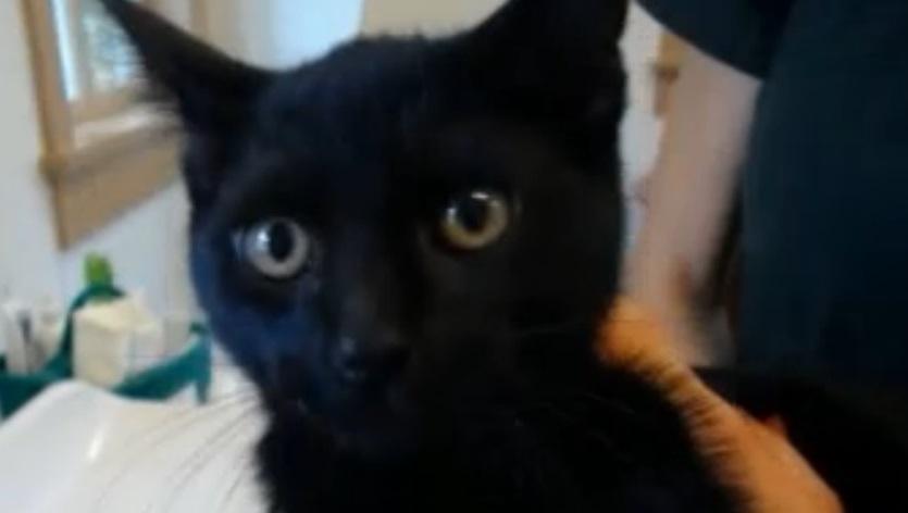 Morena kitten at intake