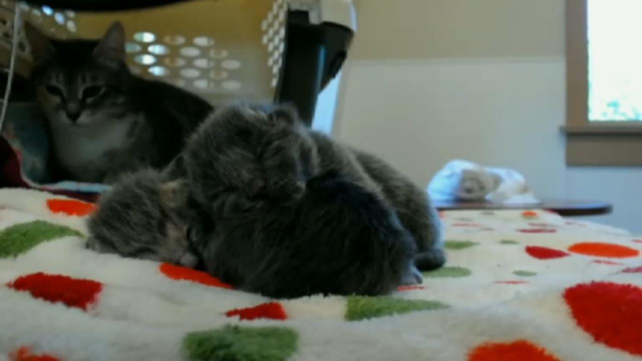 spats kitten all three 2