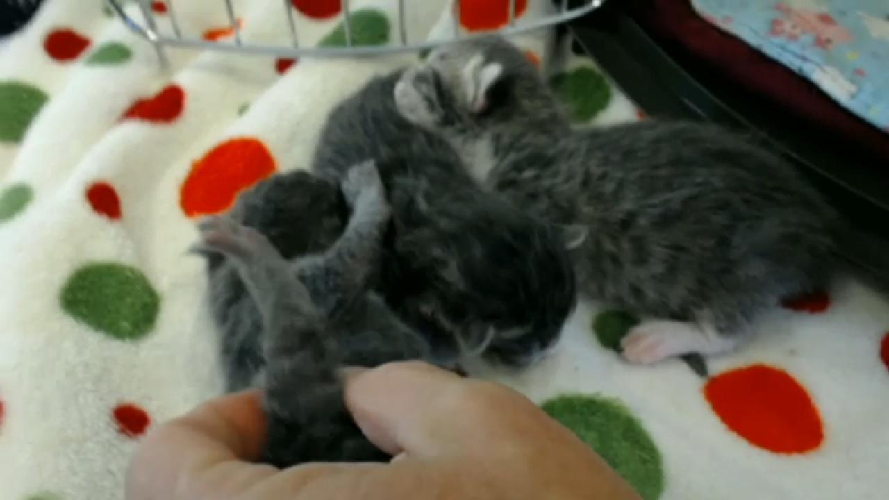 spats kitten all three