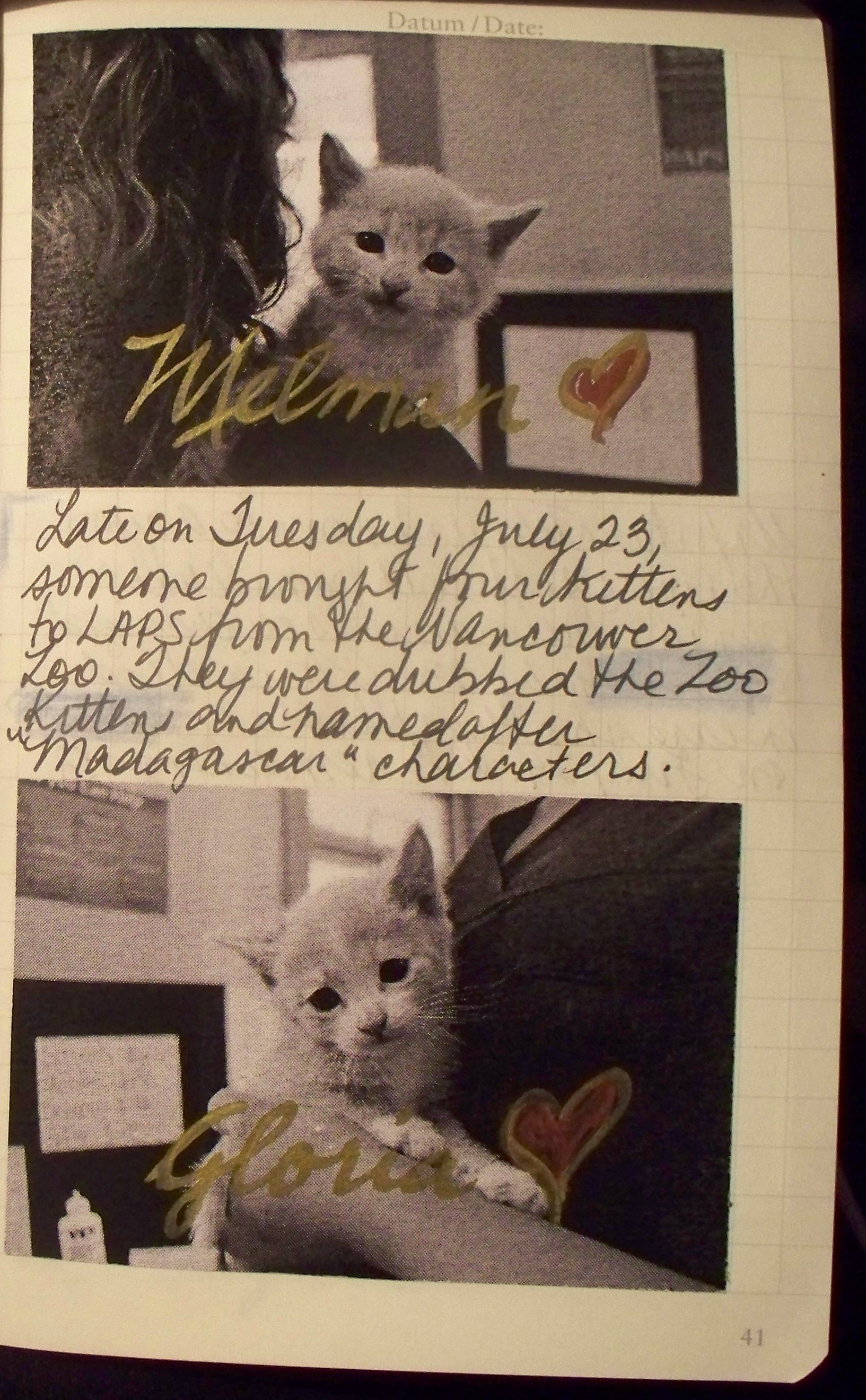 zoo kitten journal 1