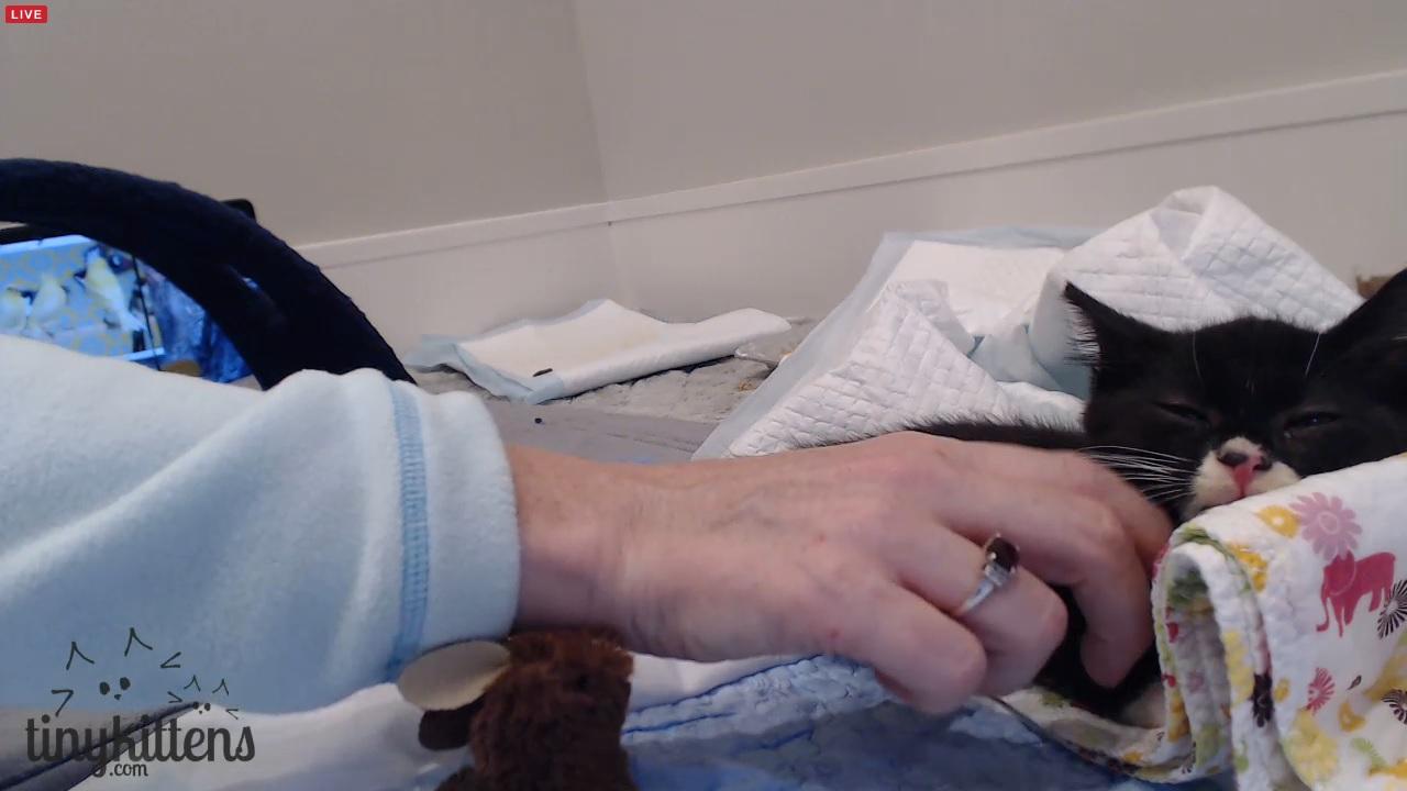 Dawn uses her kitten whisperer magic on Cassidy 2015-09-24