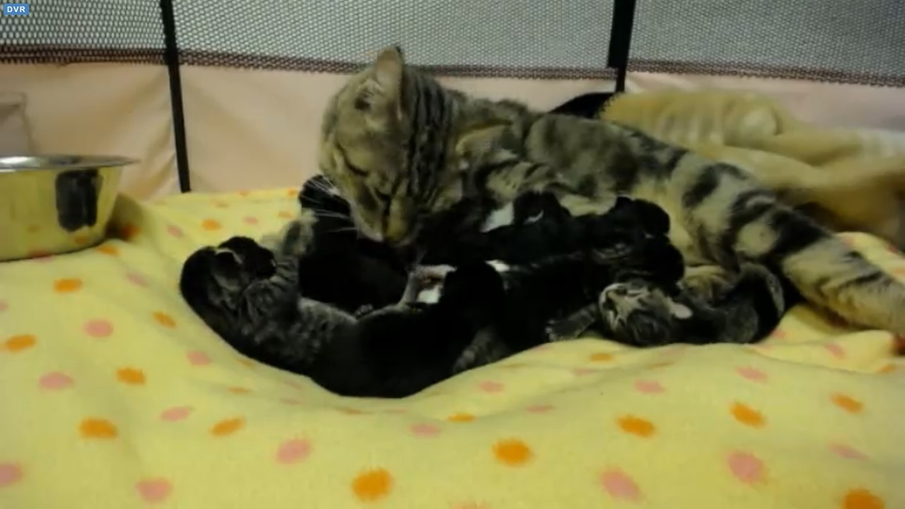 The Great Catsby Litter at 04:00 PDT 2015-09-17