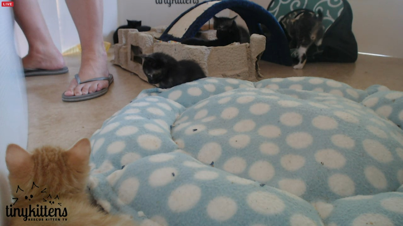 Kimsies legs and kittens after enclosure cleaned 14:00 2015-09-13