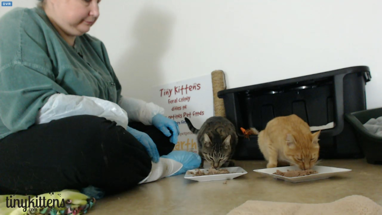 Lorie visits with Mr T and Pinecone at 11:15 PDT 2015-10-27