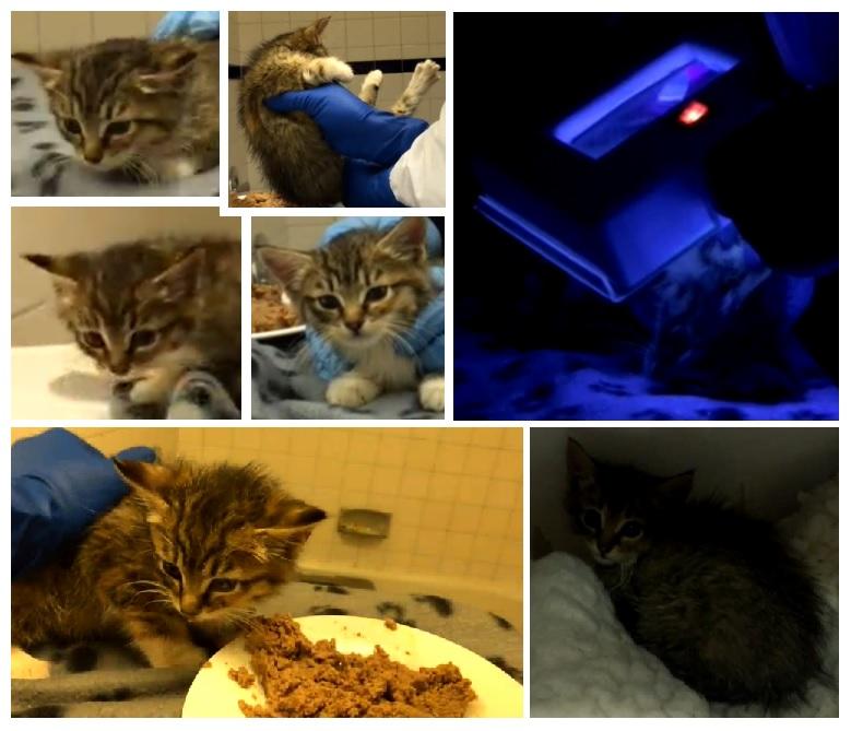 new kitten intake at TKHQ 2015-10-18