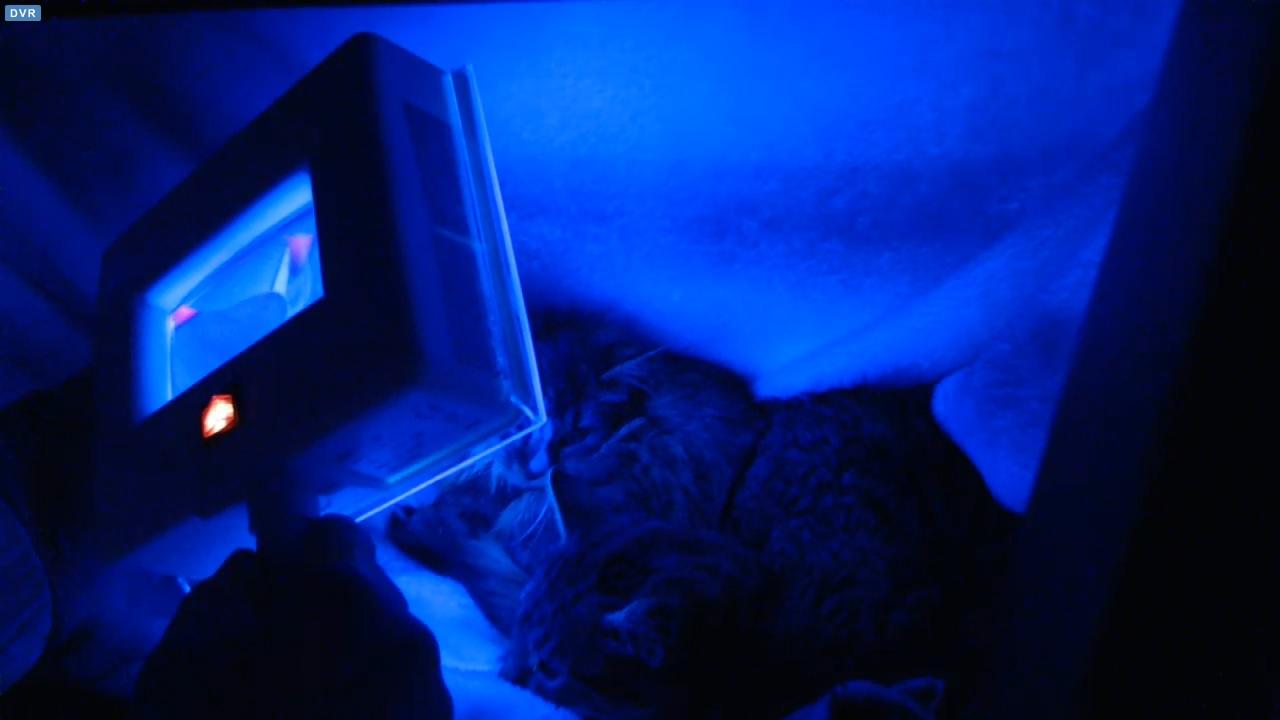 blacklighting kittens 2015-11-29