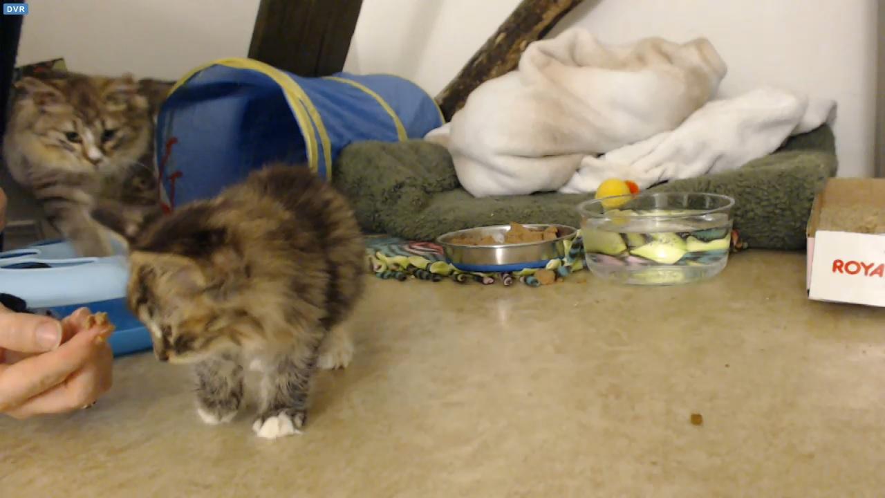 Dawn visits ringworm kittens 2 2015-12-03