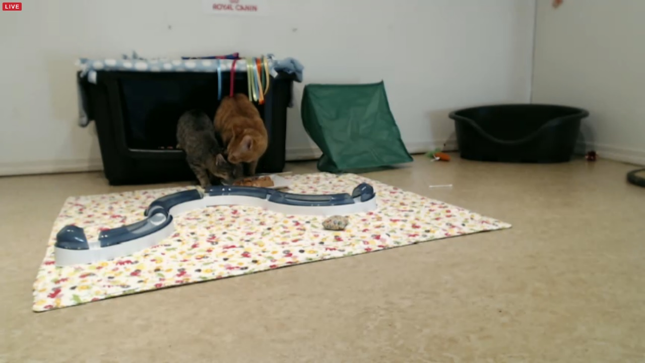 Holly and Comet eating morning 2015-12-05