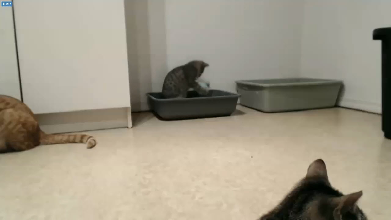 Holly playing in clean litter box 2015-12-21