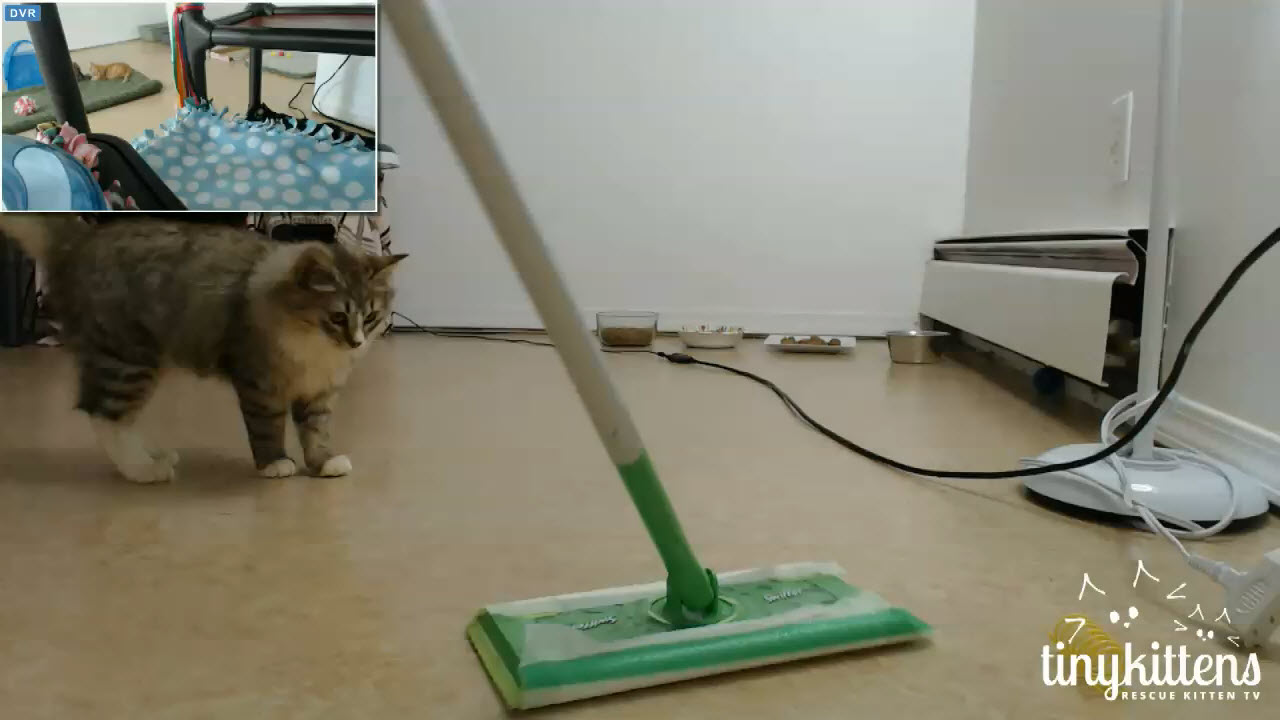 Jingle helps Gwen clean 2 2015-12-12