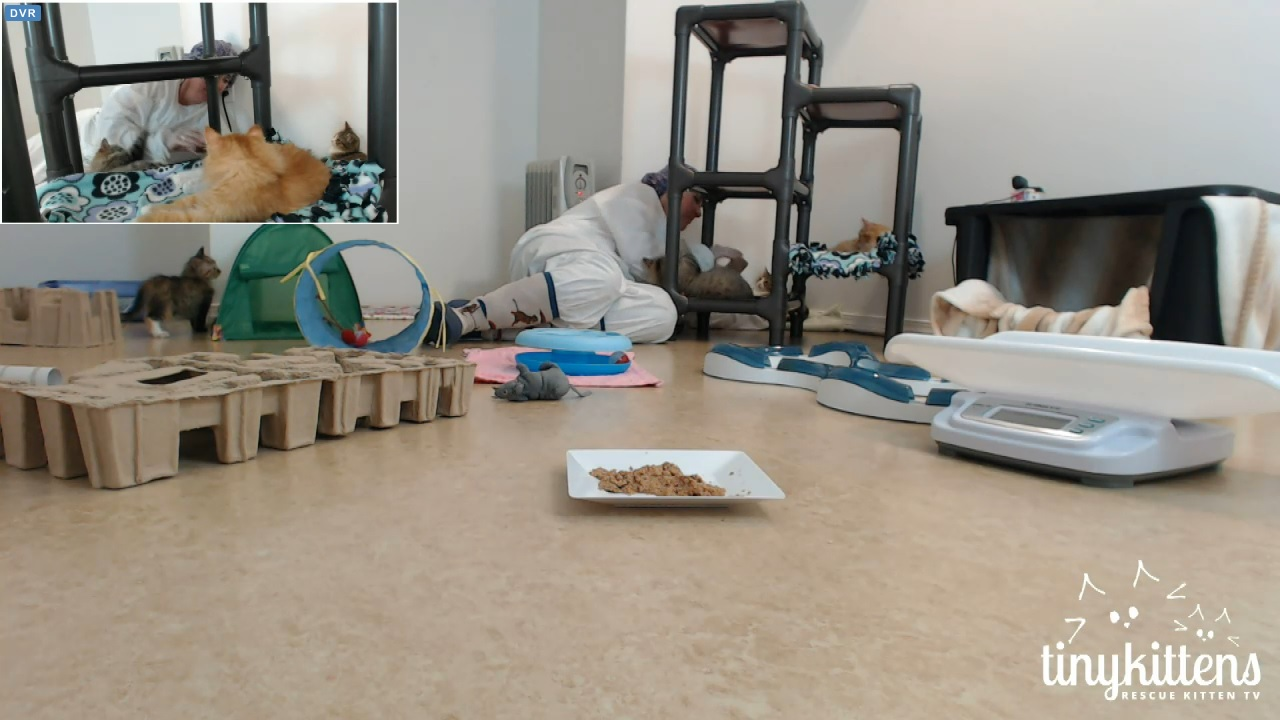 Kimsies visits ringworm kittens 2 2015-12-16
