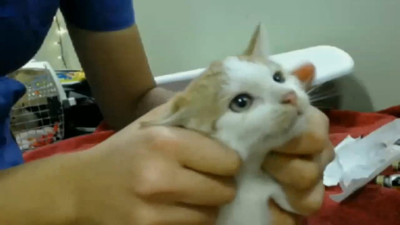 Kitten 1 pic 1 2015-12-21
