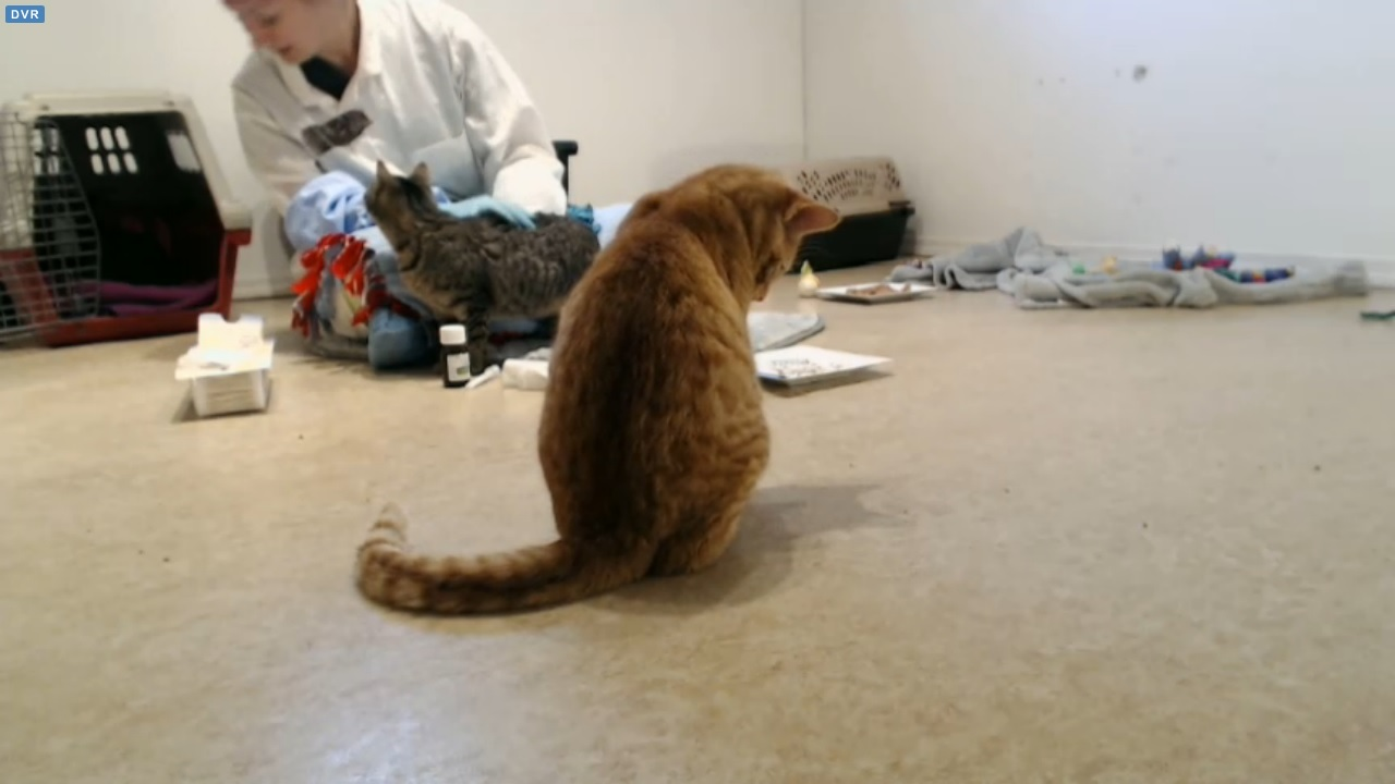 Shelly visiting with big kittens 2015-12-16