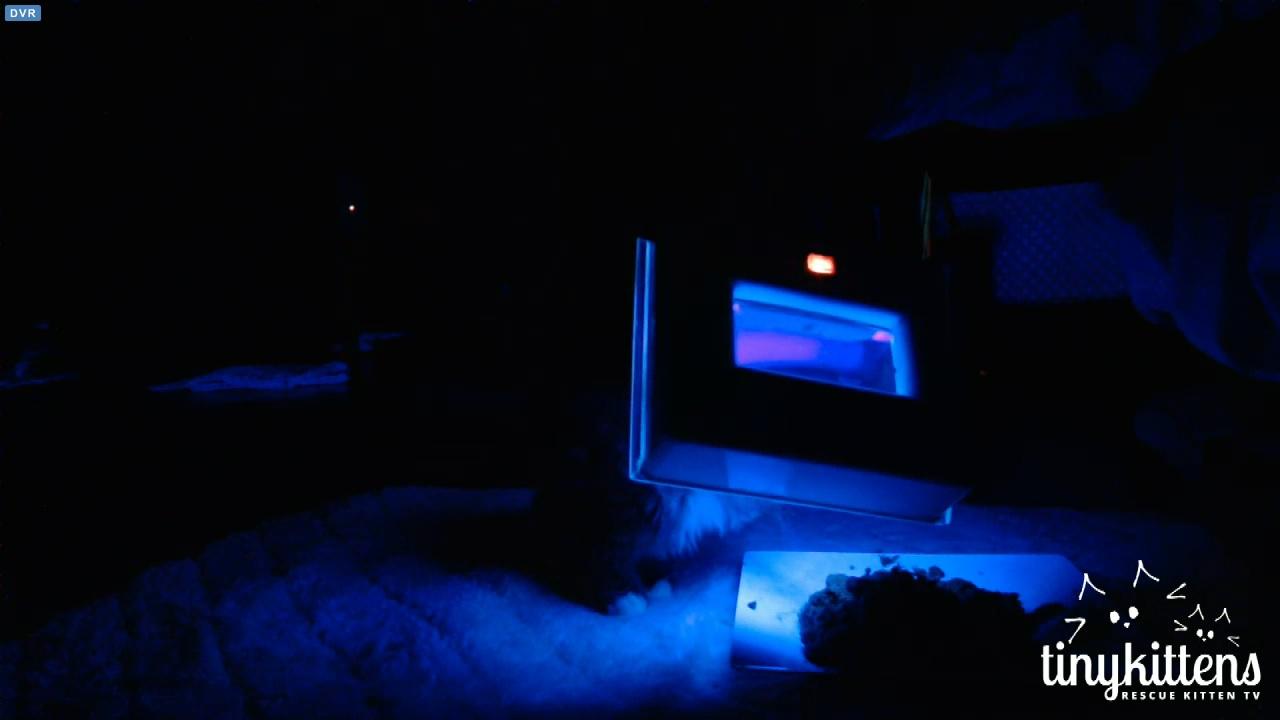 blacklighting 2015-12-04