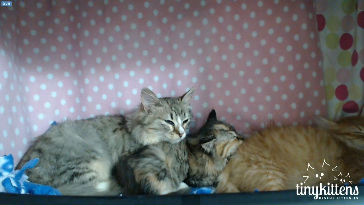 cute kittens 2015-12-04