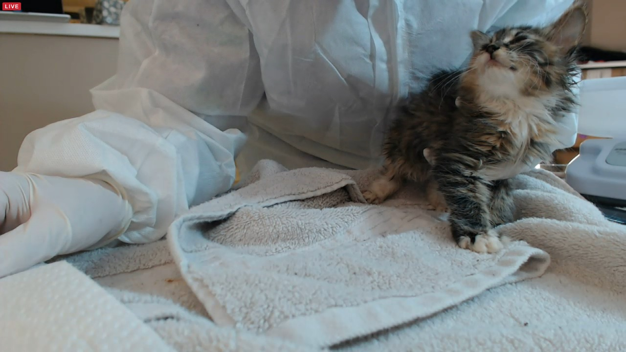 kimsies and kitten #3 01 2015-12-02