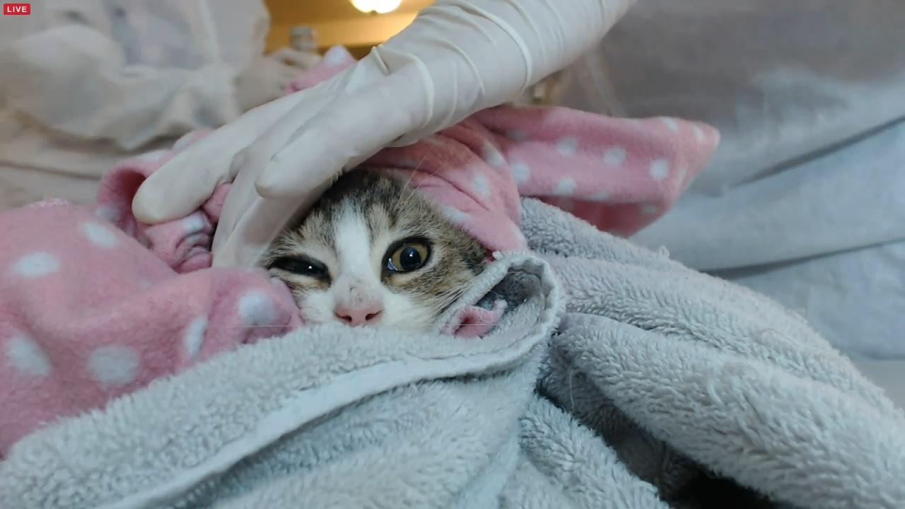 kitten 1 01 2015-12-02