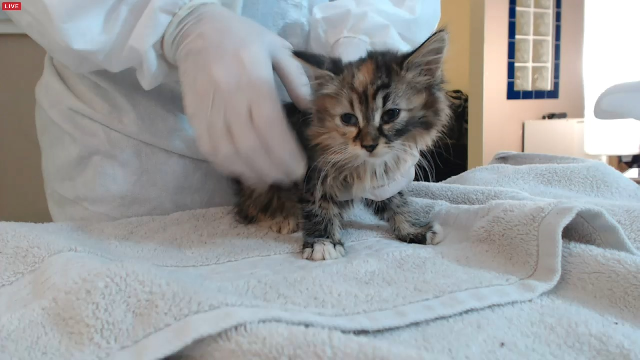 kitten 3 01 2015-12-02