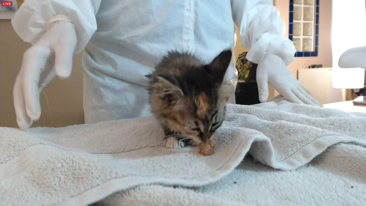 kitten 3 02 2015-12-02