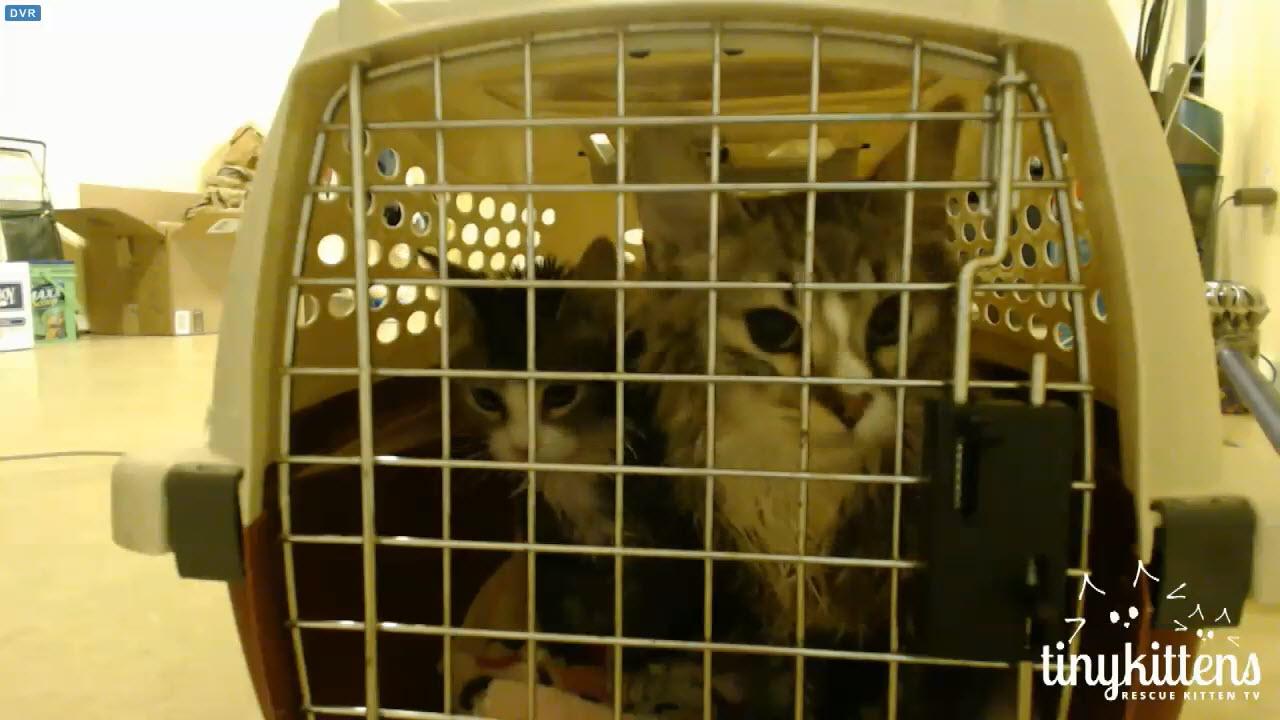 wet kittens after ringworm bath 1 2015-12-21