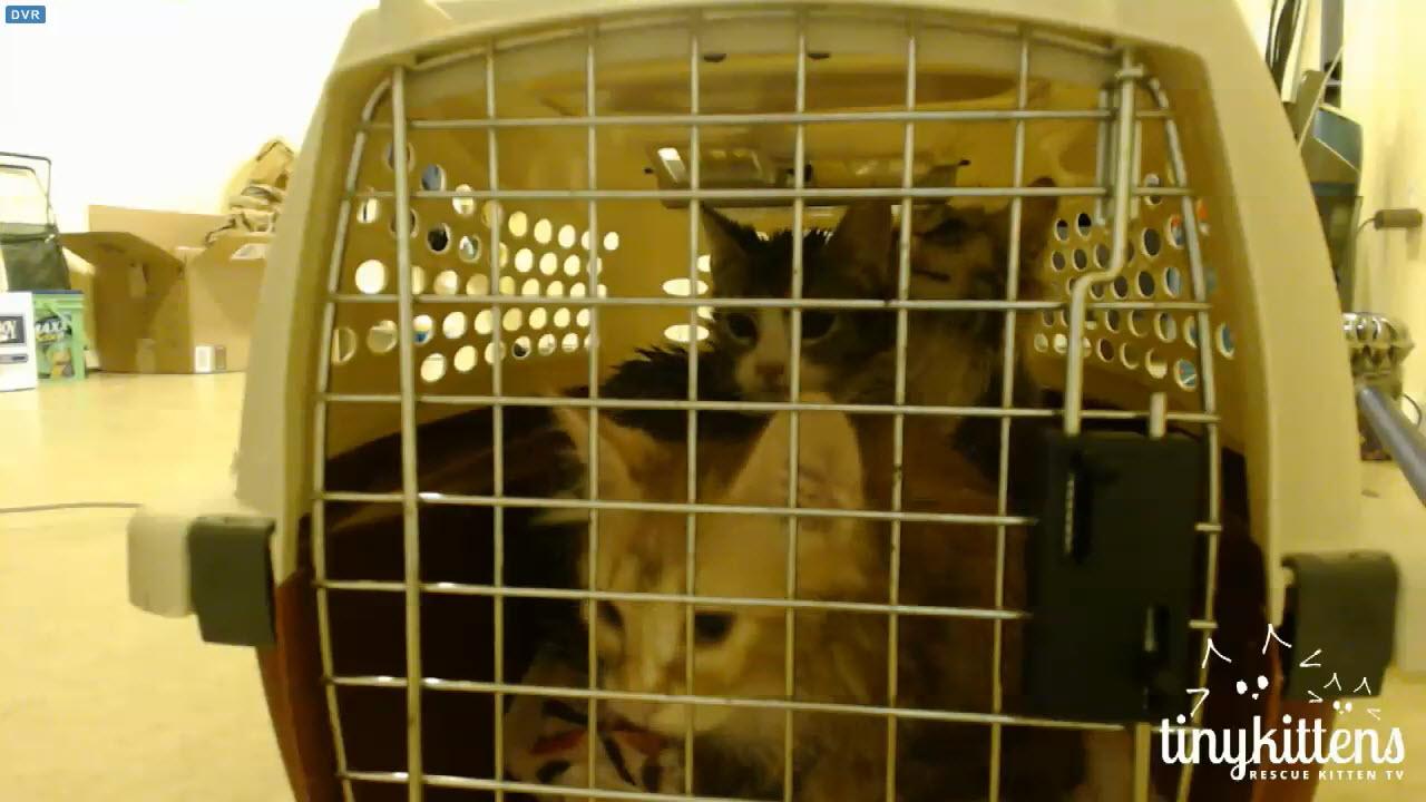 wet kittens after ringworm bath 2 2015-12-21