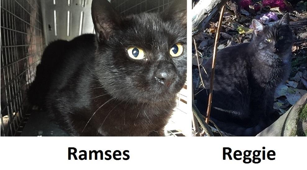 Ramses and Reggie