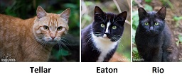 ferals currently being socialized at/through LAPS as of 2016-01-29 - Tellar, Eaton, and Rio