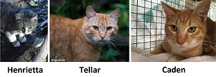 ferals currently being socialized at LAPS as of 2016-01-23