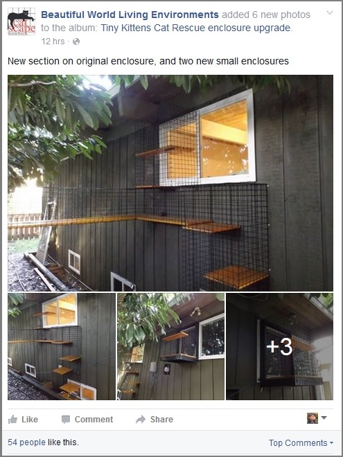 Snapshot of Better World Living Environments catio upgrades at TKHQ post -- click image to see photo album on their Facebook page