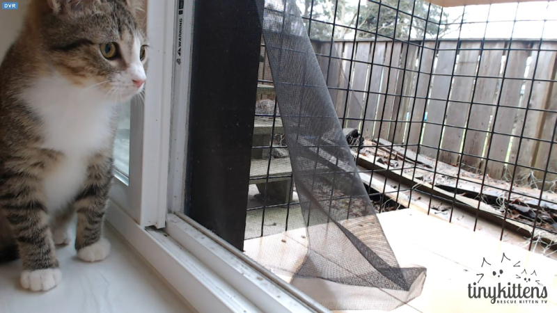 Elf checks out catio 2016-02-07