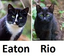 ferals currently being socialized at/through LAPS as of 2016-02-13 - Eaton and Rio