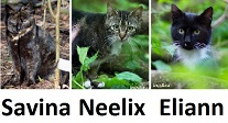 ferals at TKHQ as of 2016-02-25 - Savina, Neelix, and Eliann