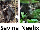 ferals at TKHQ as of 2016-02-29 - Savina and Neelix
