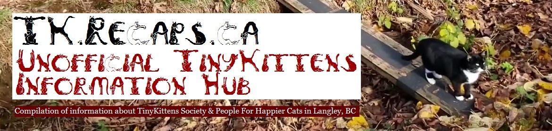 Unofficial TinyKittens Information Hub header image
