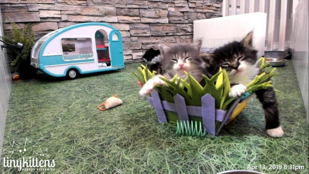 FLower kittens in a basket 2019-04-13