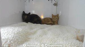 Sasha (l) and Talula (r) in nest box at TKHQ 2.1